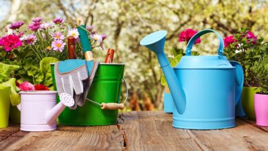 Photo of The Types of Watering Tools