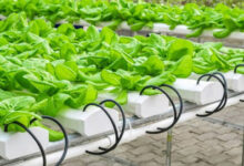 Photo of What Is the Best PH for Your Hydroponic System and How to Maintain it?