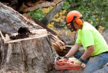 Photo of Importance of Tree Removal Services