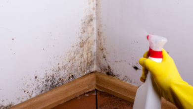 Photo of 5 Most Common Types of House Mold and How to Get Rid of It – 2020 Guide