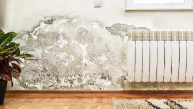 Photo of 7 Ways to Know If Your Home Is Mold Free